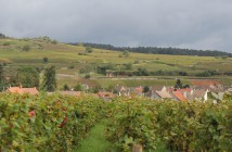 chablis open simmonet