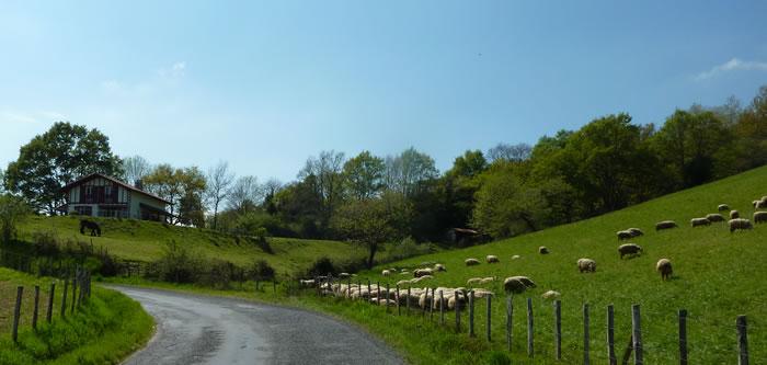 mouton-basque