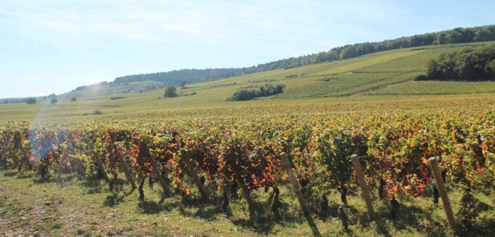 ブルゴーニュ地方の郷土料理、特産品  Region Bourgogne