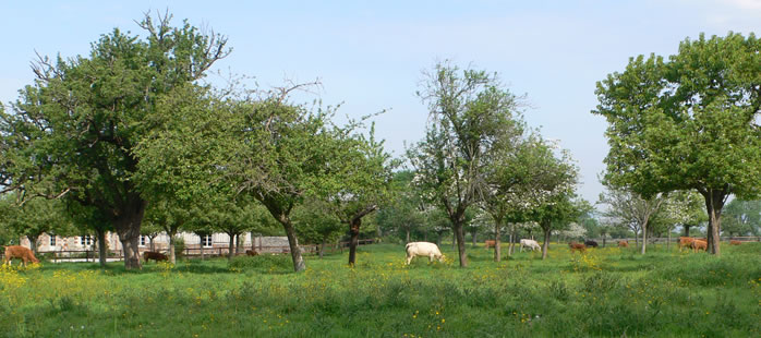 フランスのカマンベールチーズ論争 Camembert de Normandie