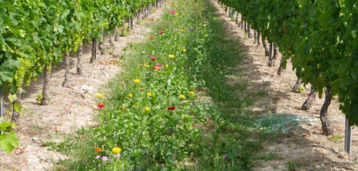 ボルドー 持続可能なワイン造り Vin de Bordeaux et le développement durable